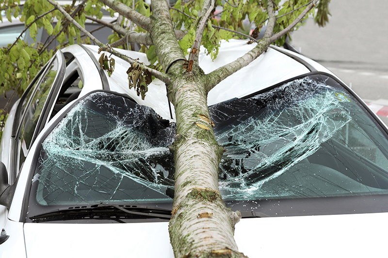 tree fell on a car