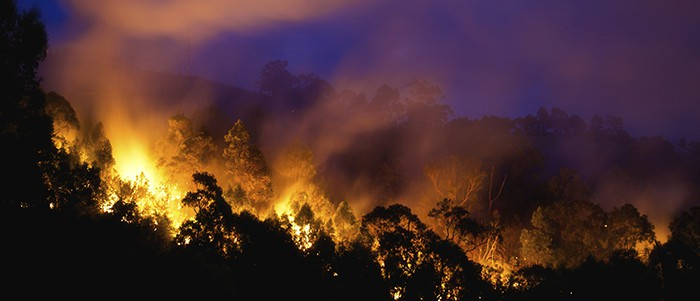 Forest lit on fire at night