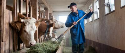 Canada dairy farmer