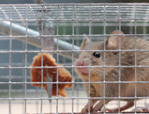 Key tips to protect your business against rodents